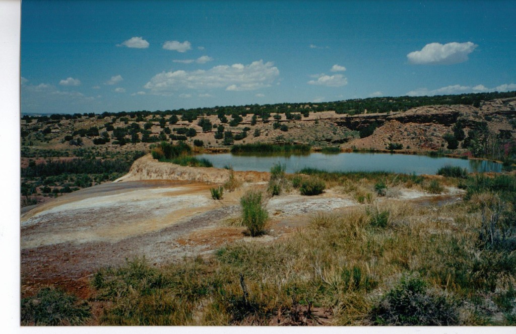 This is Swimming Pool spring. It is amazing to find water like this in the desert.