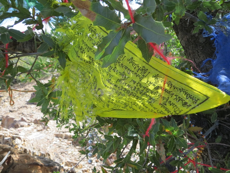If you follow the braided path uphill, you'll come upon an Emory oak full of prayer flags.