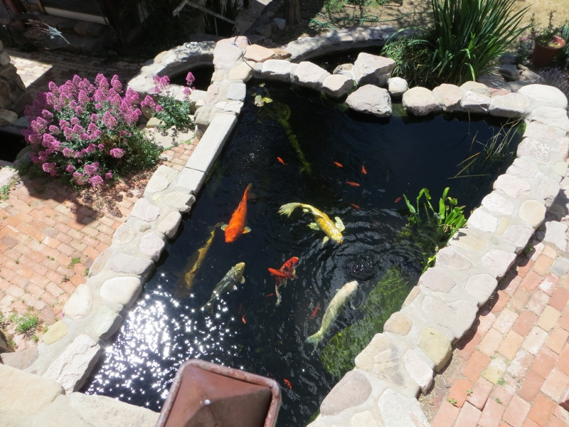When we looked over the wall, we saw this Koi pond. The pond's builder invited us come down a stone stairway he built to get a closer look.