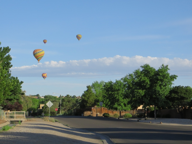 As we were crossing the road back to our house, we had these guys floating above us.