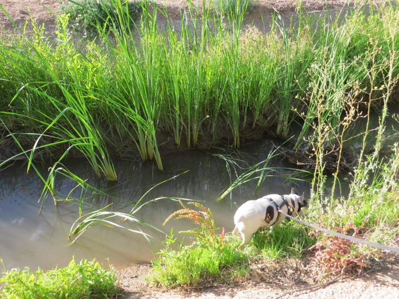Maybe Teddy will find the baby Moses floating in the bulrushes.