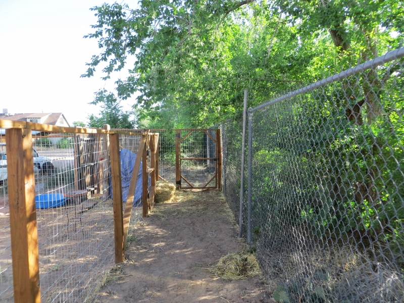 There is even an abandoned acequia on the border of the community. The gate opens to a path that follows the old ditch.