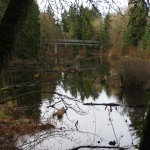 After the stream leaves the wetlands it flows to the Willamette River.