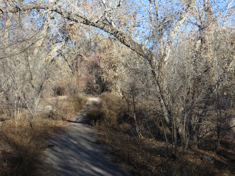 Can you imagine having a network of trails, like this bosque path, right in the middle of the city?