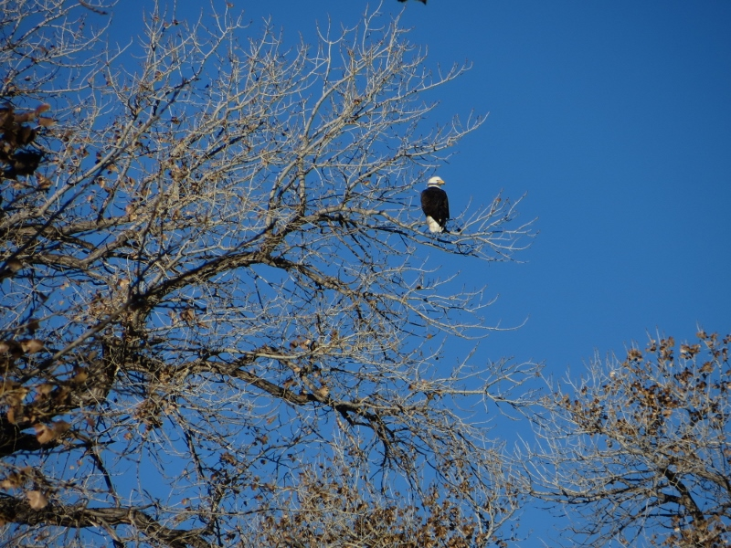 And this is the eagle that flew right in front of us.