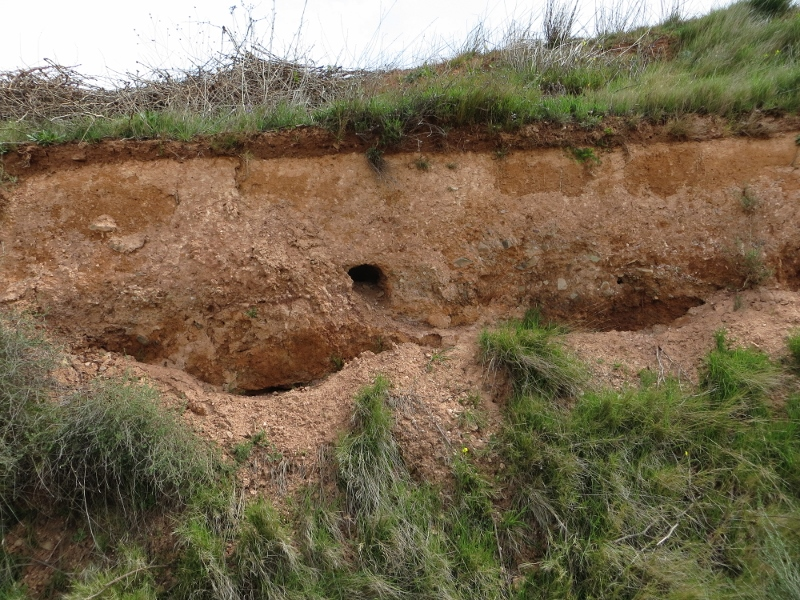 The quick brown fox came out of this hole.