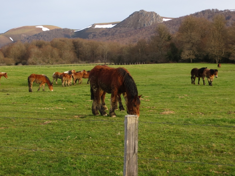 Horse Country in the Pyrenees foothills