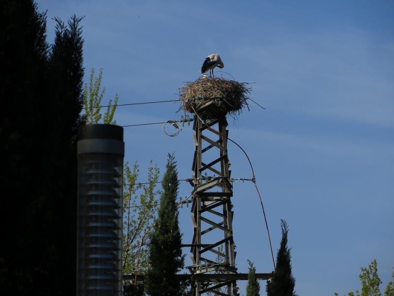 This was the first stork I saw on the Camino in Logrono.