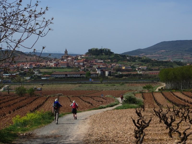 The town of Navarette in La Rioja is ahead. But if you notice almost all the fields are planted in grapes.