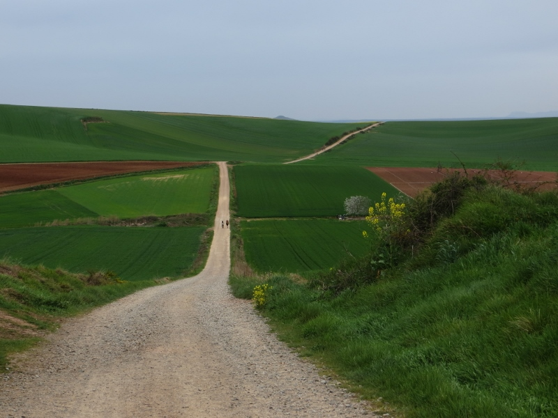 The Camino enters wheat country after leaving La Rioja.
