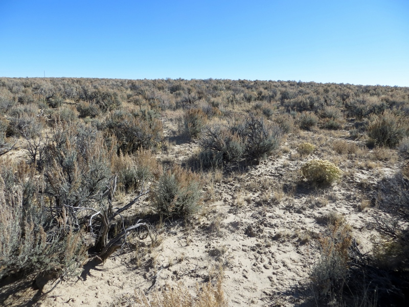 Once we reached the edge, we were back in the sagebrush and headed back to the car.