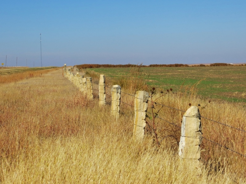 If you're driving through the high plains of west central Kansas, where there are no trees, you'll fence posts made out of limestone dug up out of the ground.